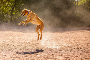 Dog in Air
