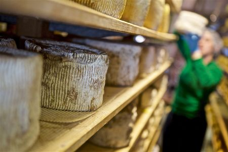 Cheesemaker Stacking Wheels of Cheese