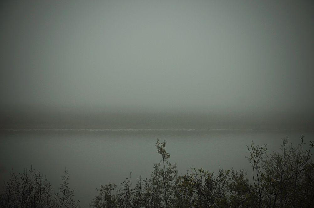 1land_fogweb