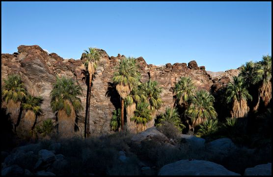 Indian Canyons - Palm Springs, CA