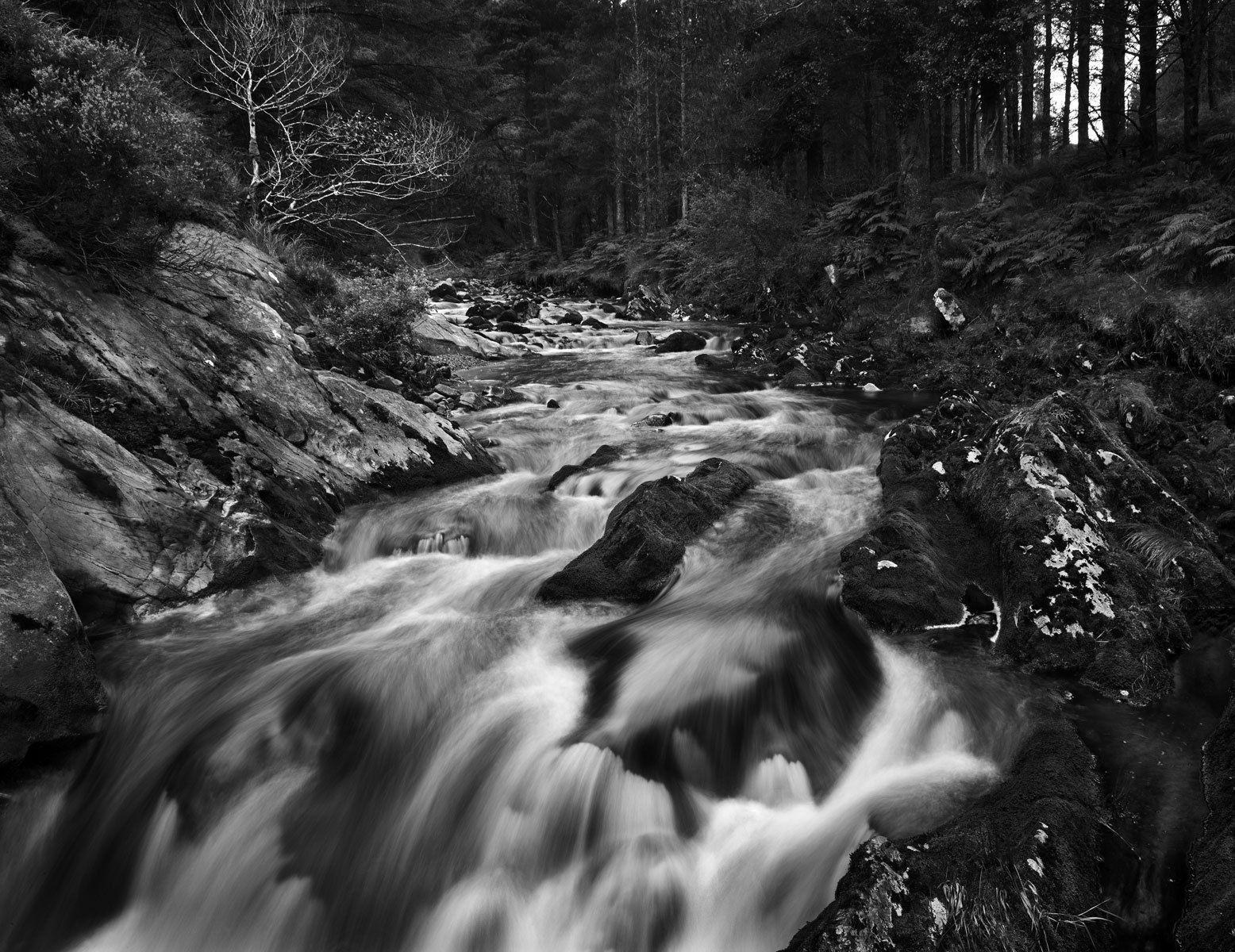 Flowing Stream, Letterkeen Wood, County Mayo Ireland