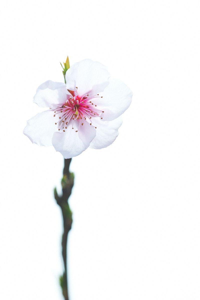 1farm_feb_19_2012_71_p_1.jpg