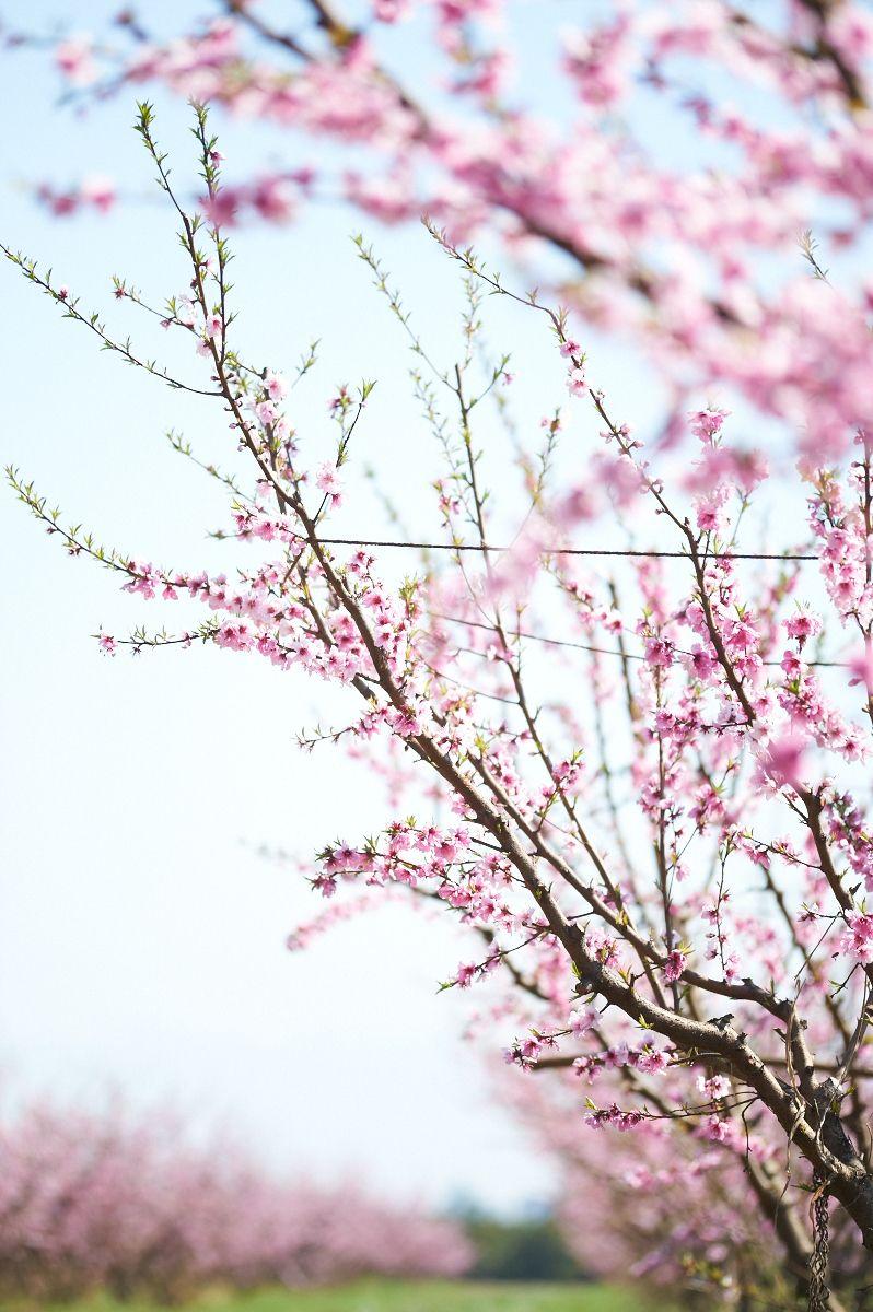 1farm_mar_04_2012_221.jpg
