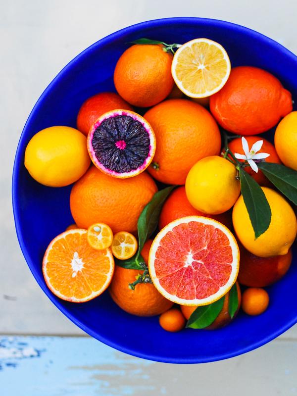 1dsc_0031_citrus__february_16__2012_0221.jpg