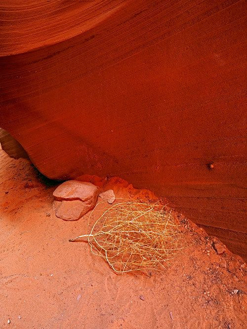 """""""Desert Sage"""""""