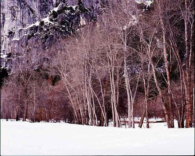 14_0_115_1LB_99_Valley_Winter_Trees.jpg