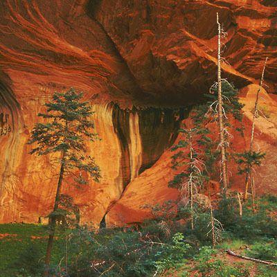 Desert_Southwest_Portfolio.jpg