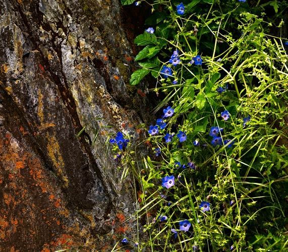 Rock and Flowers: Hite Creek