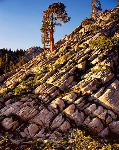 Sierra Bands