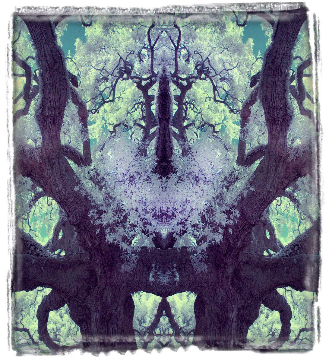 treaty oak, fl'12 3606aa