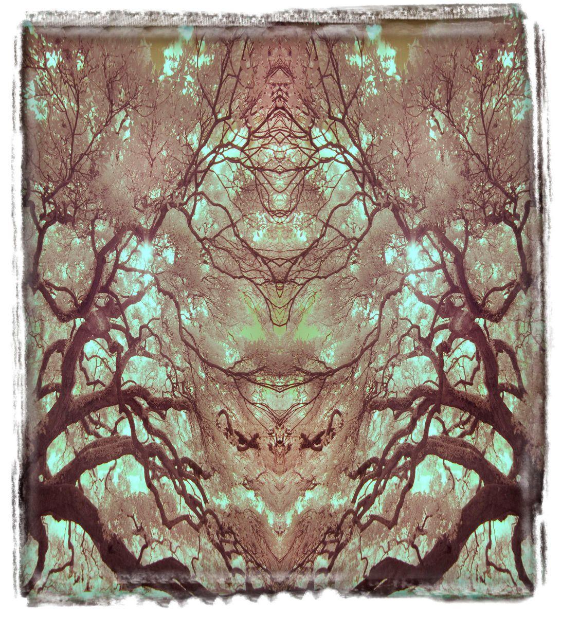 treaty oak, fl'12 3644a