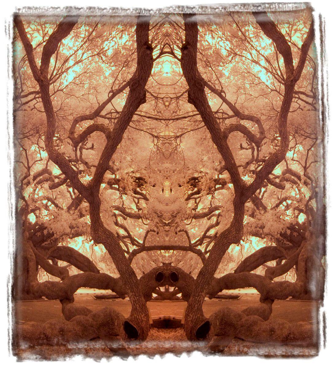 treaty oak, fl'12 3647aa