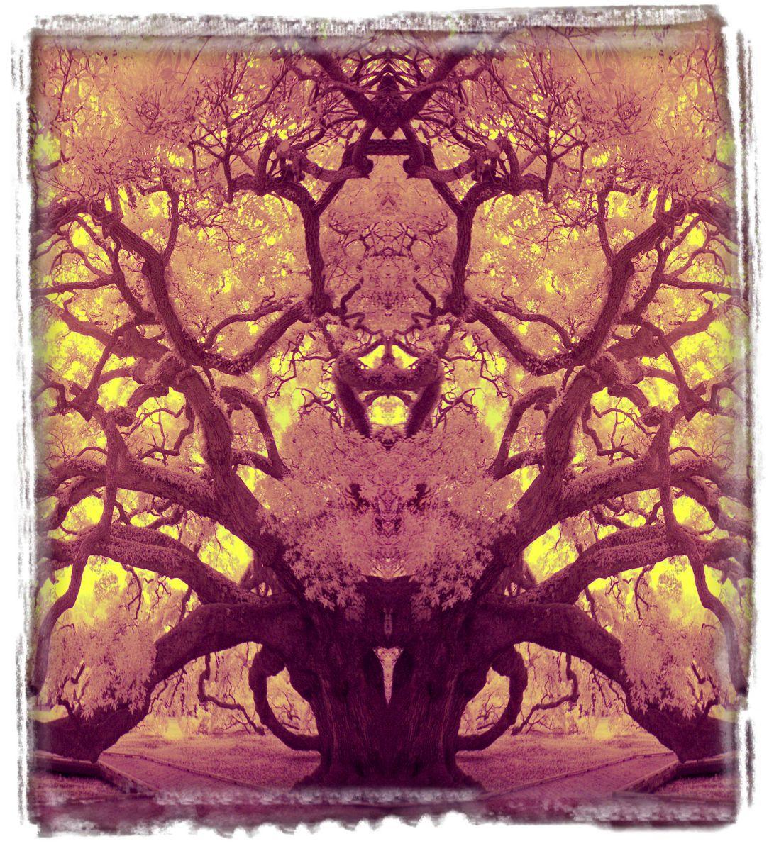 treaty oak, fl'12 3639aaa