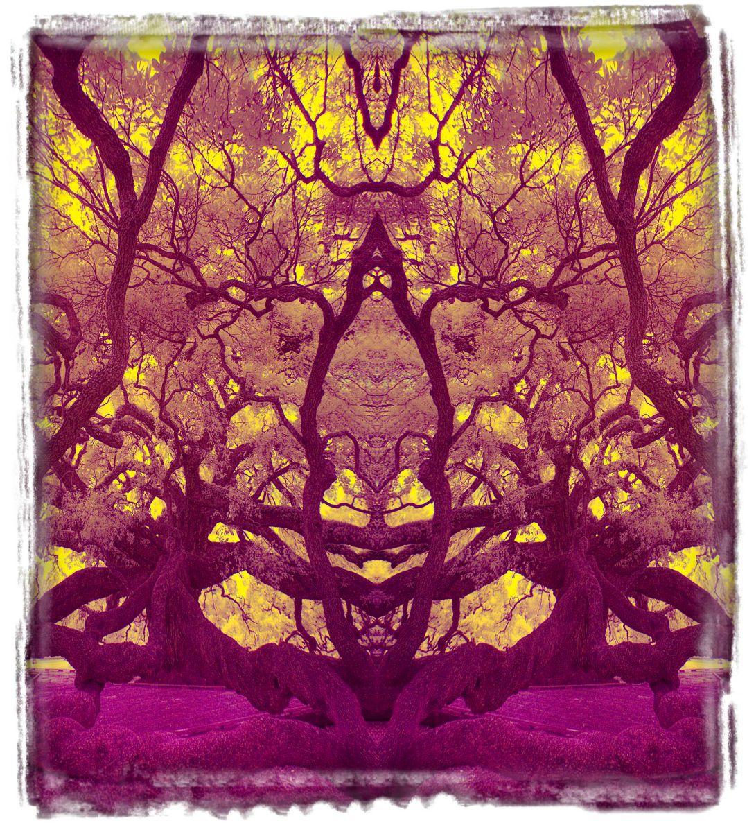 treaty oak, fl'12 3647b