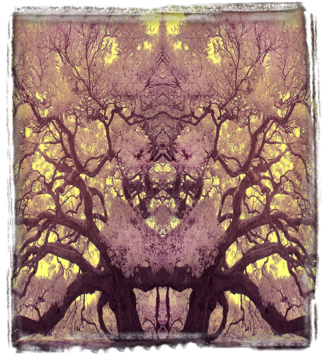 treaty oak, fl'12 3640a