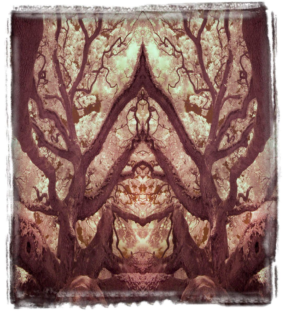 treaty oak, fl'12 3622a