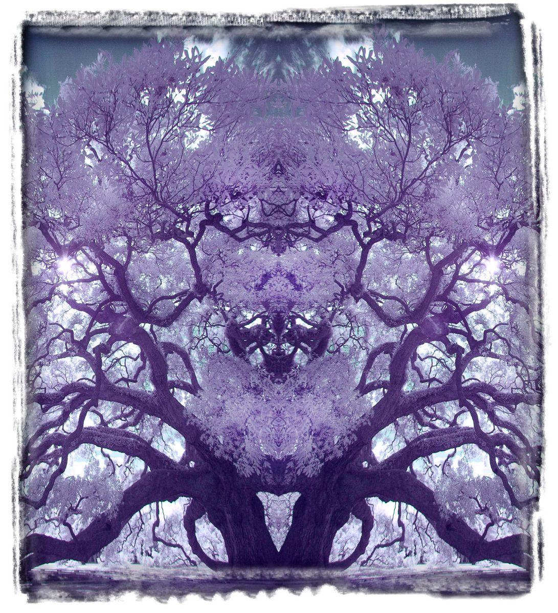 treaty oak, fl'12 3644b