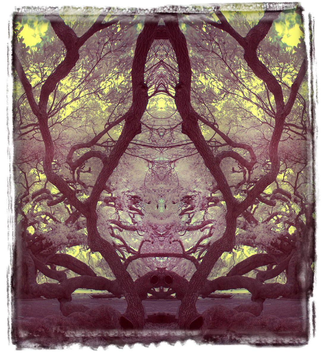 treaty oak, fl'12 3647a