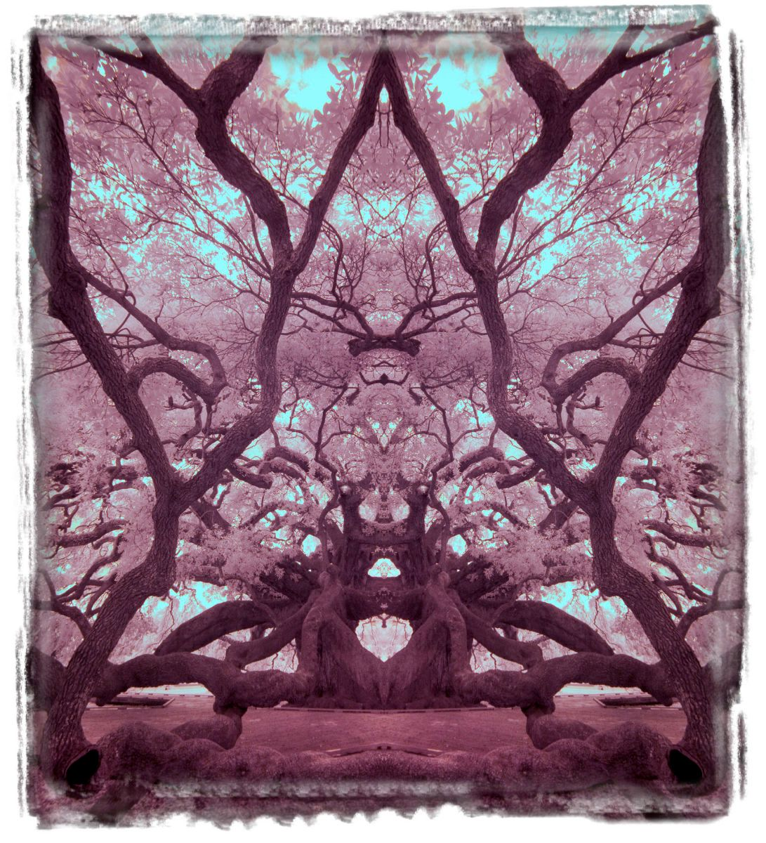 treaty oak, fl'12 3647cc