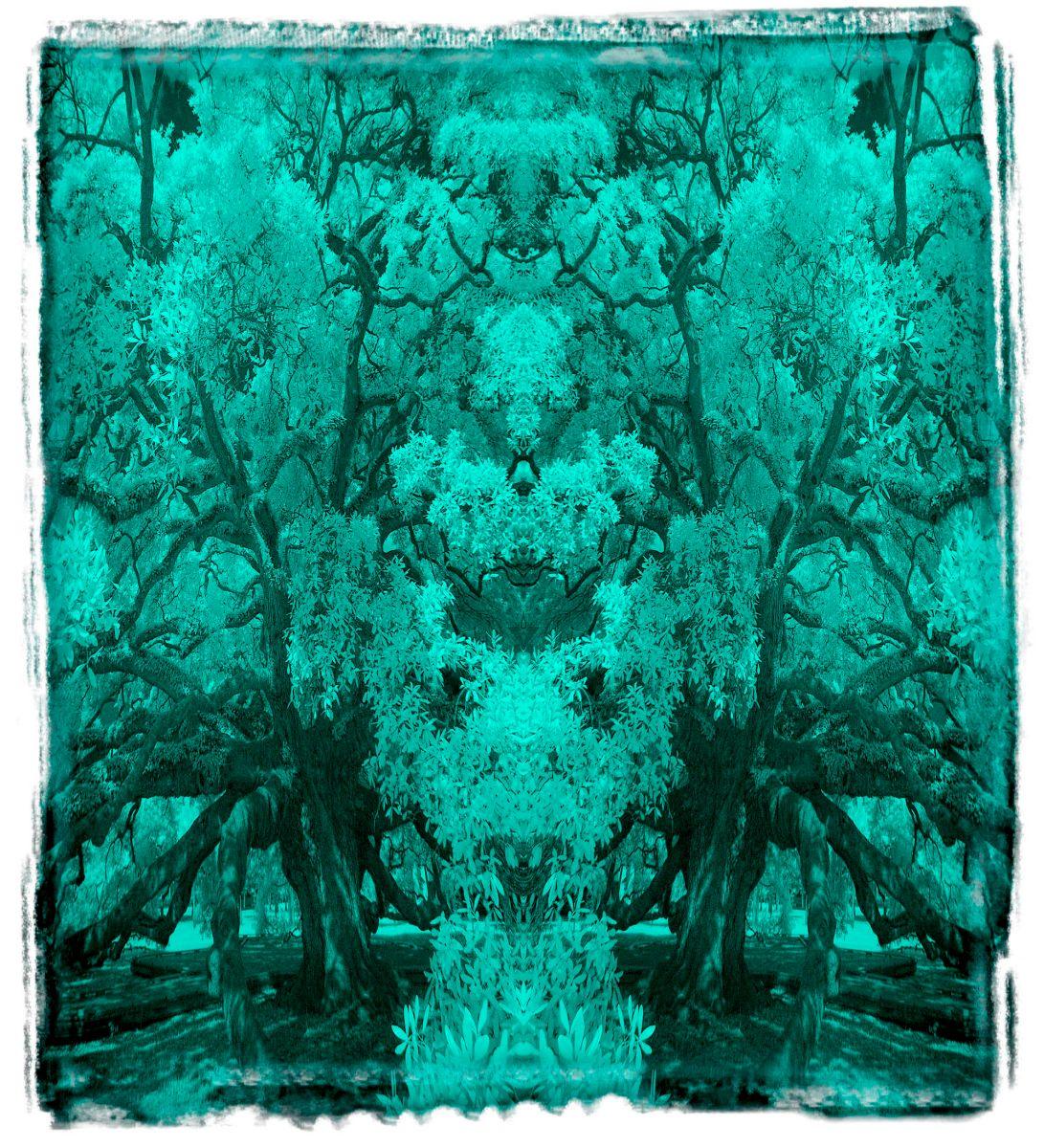 treaty oak, fl'12 3659a