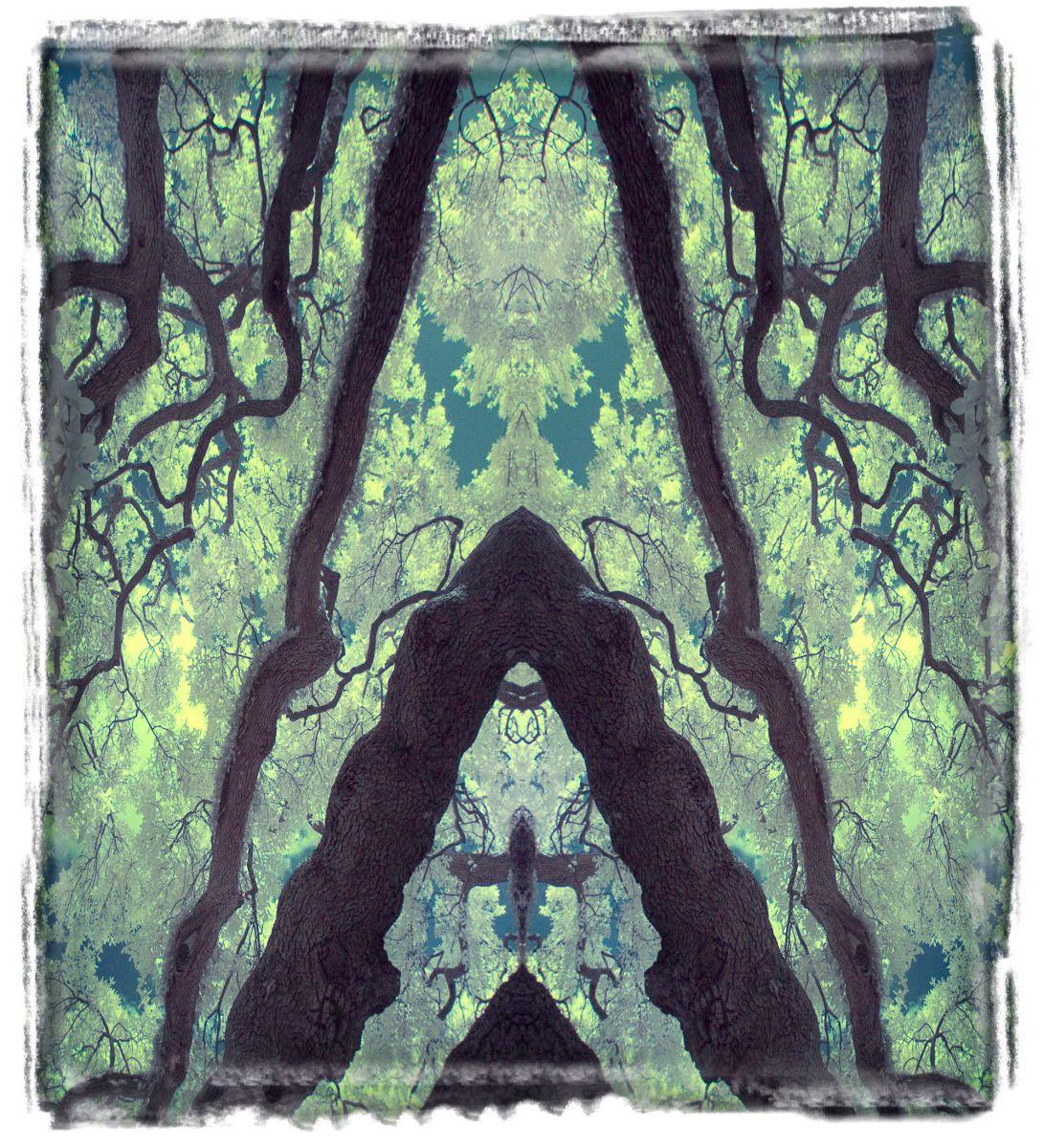 treaty oak, fl'12 3614aaa