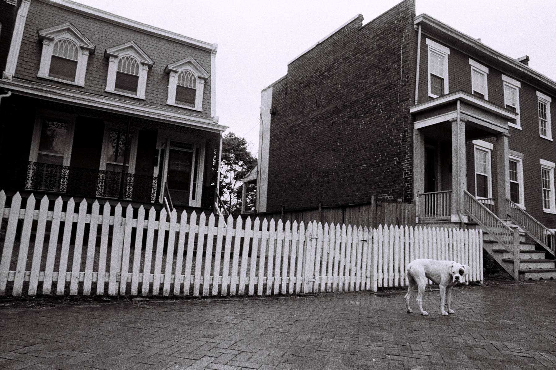 4_1downtown_dog_for_2012_website.jpg