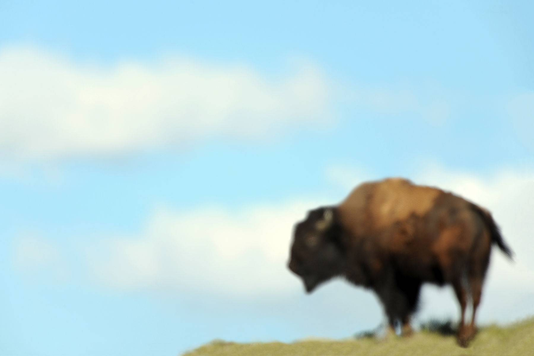 5_1buffalodsc_3719r_forwebsite.jpg