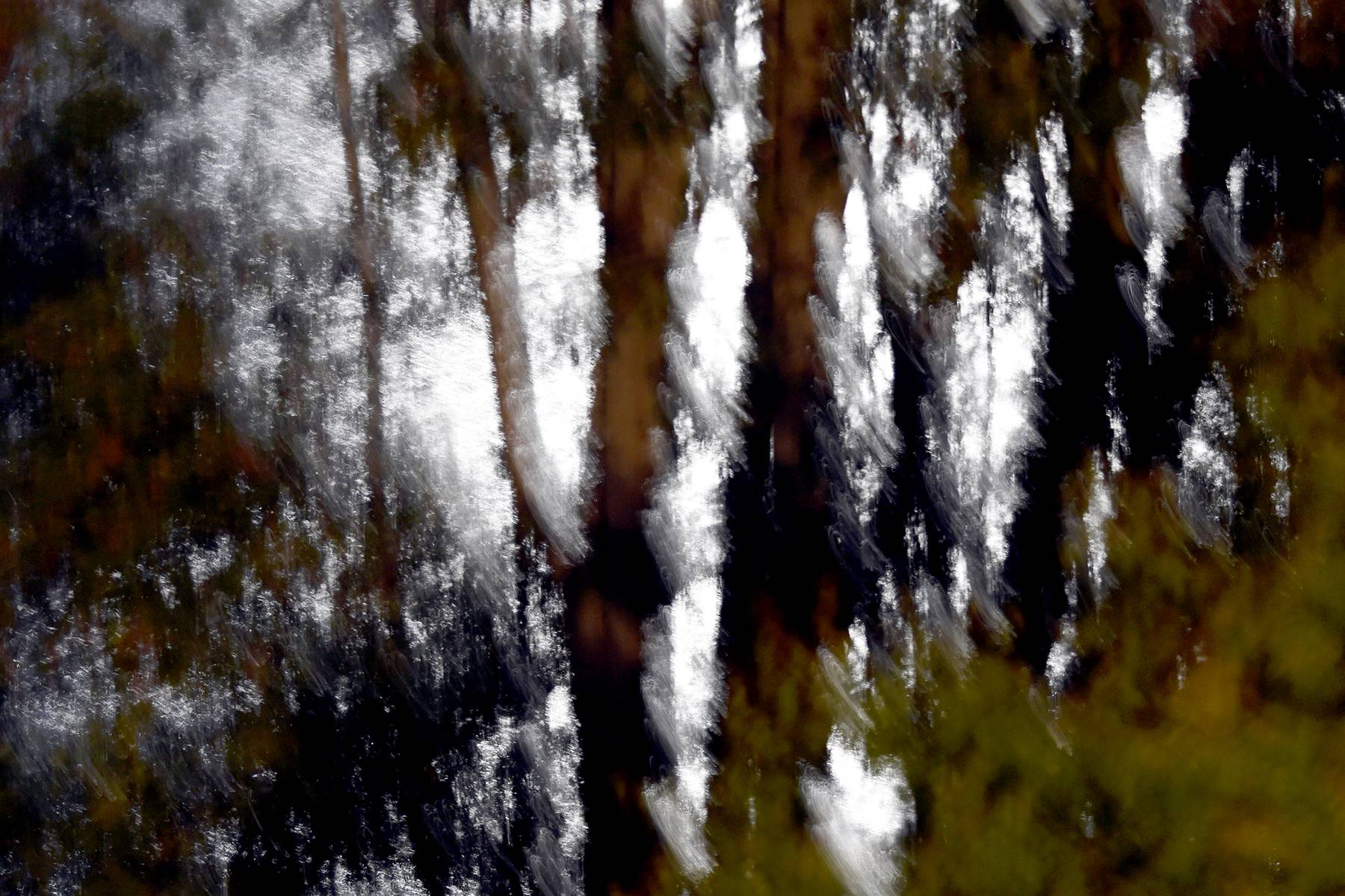 24_11-_trees_at_night_painted_with_light_dsc_7157.jpg