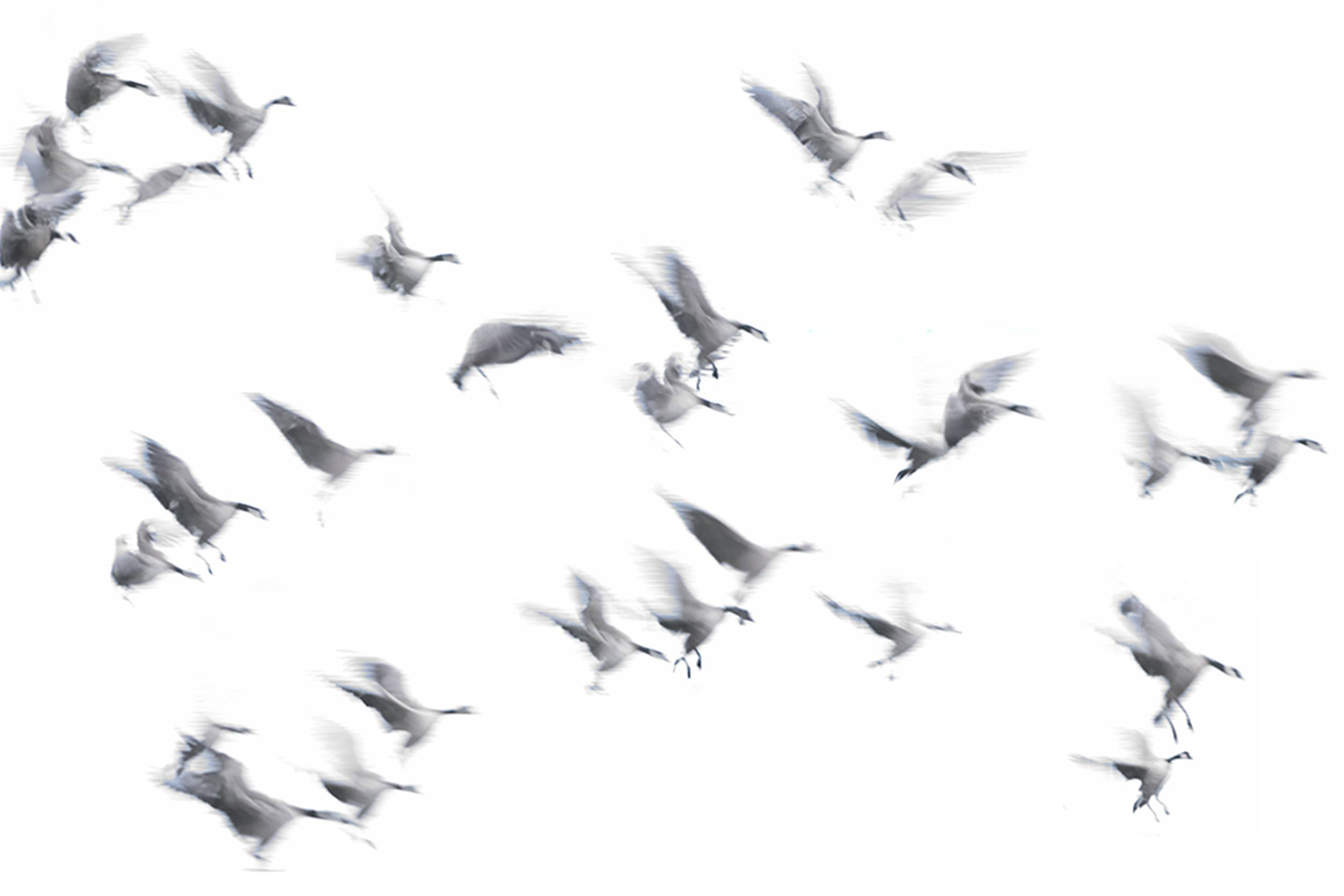 Flying geese small for website.jpg