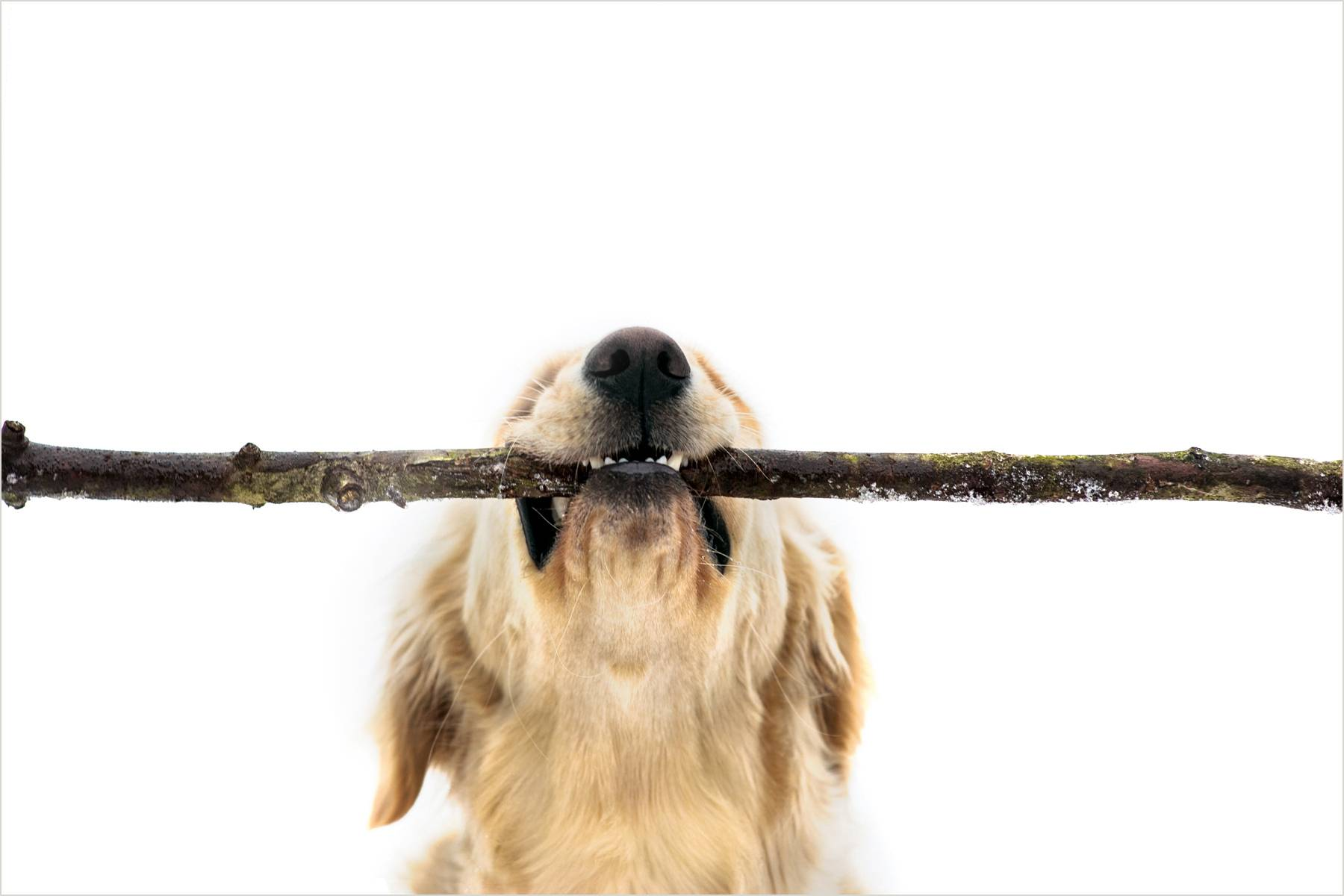 24_1dog_with_stick_for_web.jpg