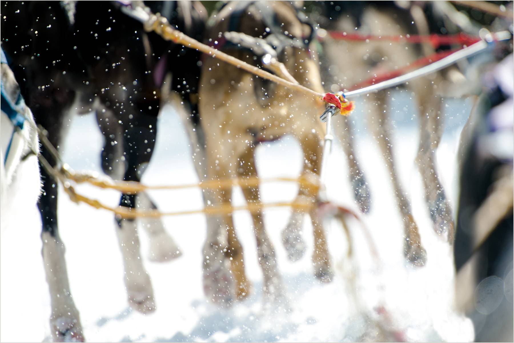 27_1sled_dogs_for_web.jpg