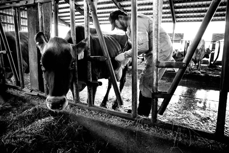 1skmphoto_dairy_farmers_026.jpg