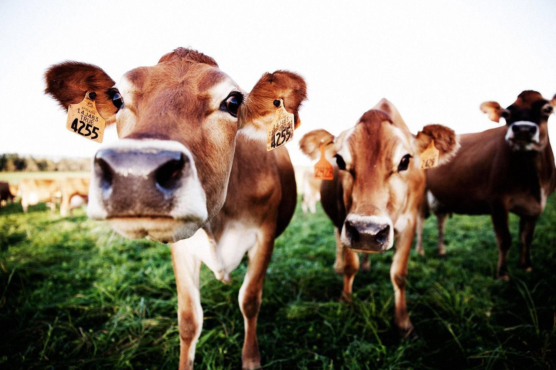 1skmphoto_dairy_farmers_003.jpg