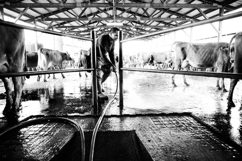 1skmphoto_dairy_farmers_028.jpg