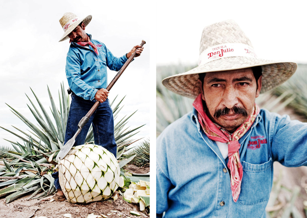 Portrait of a jimador for Don Julio