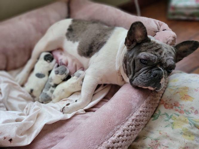 Nellie & Puppies