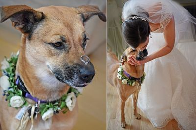 Chicago Bride and Flower dog