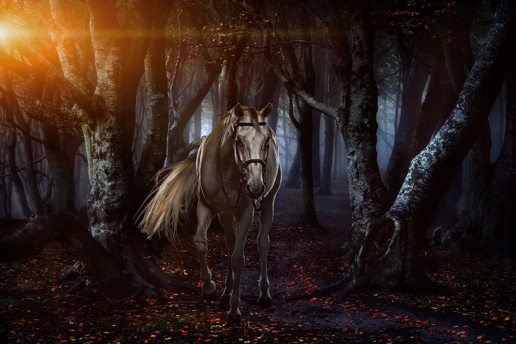 horse22.jpg