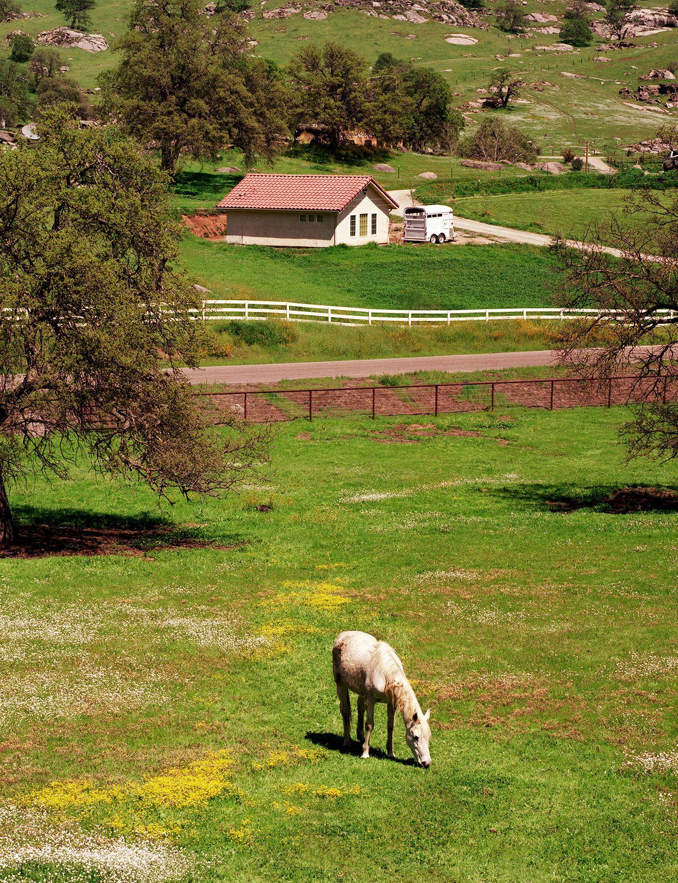 horse pasture copy.jpg