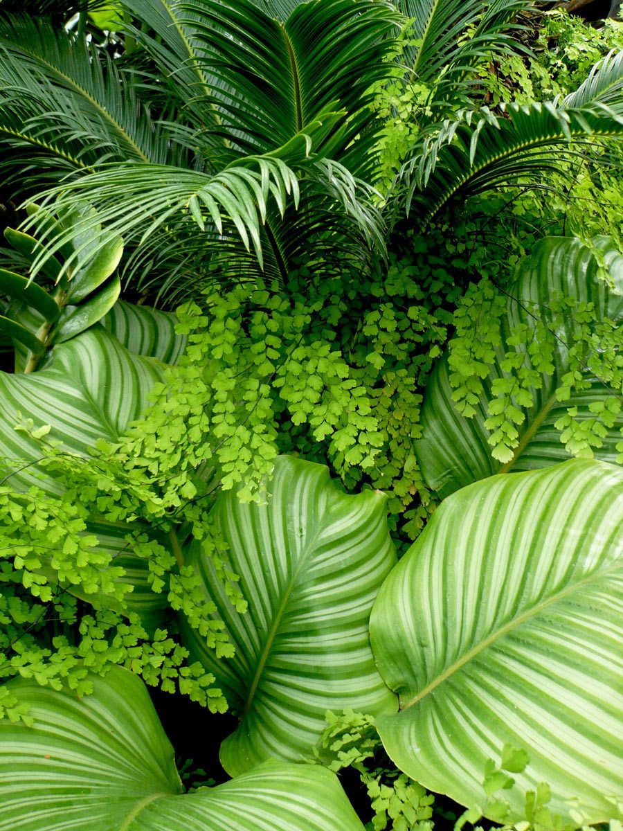 Sago Palms, Ferns and Hostas