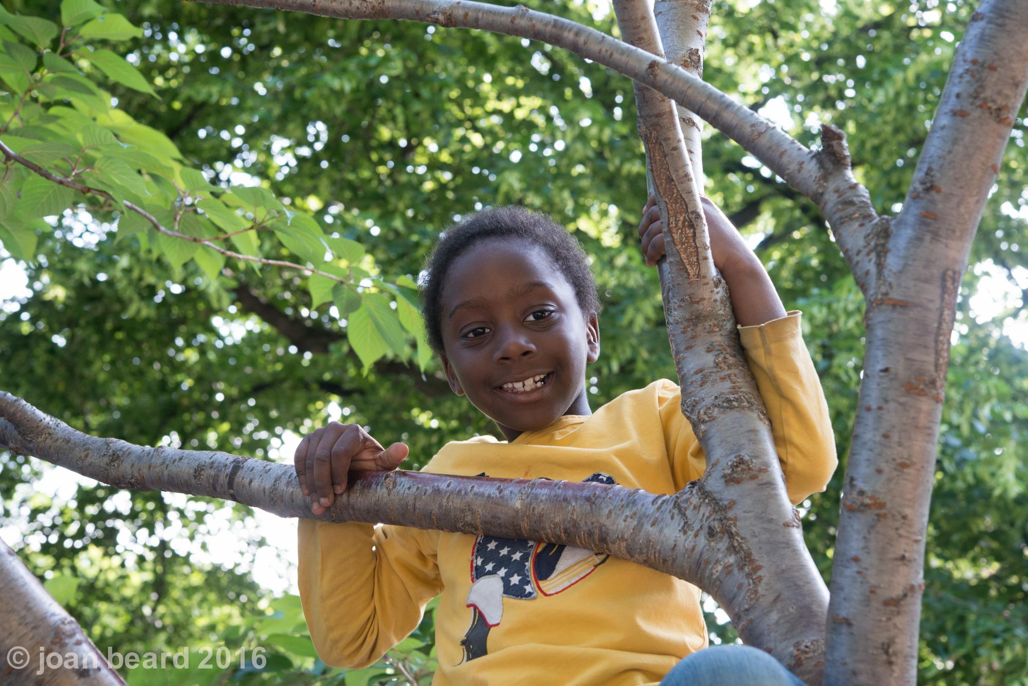 boy in tree,  6479.jpg