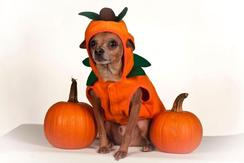 1Mr_Squeaks___pumpkin.jpg