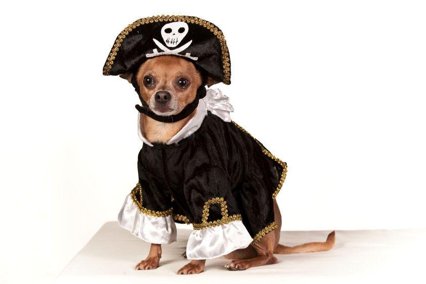 1Mr_Squeaks___pirate.jpg