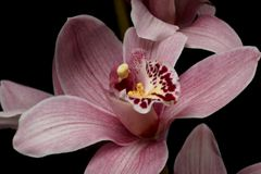 Flowers262.jpg