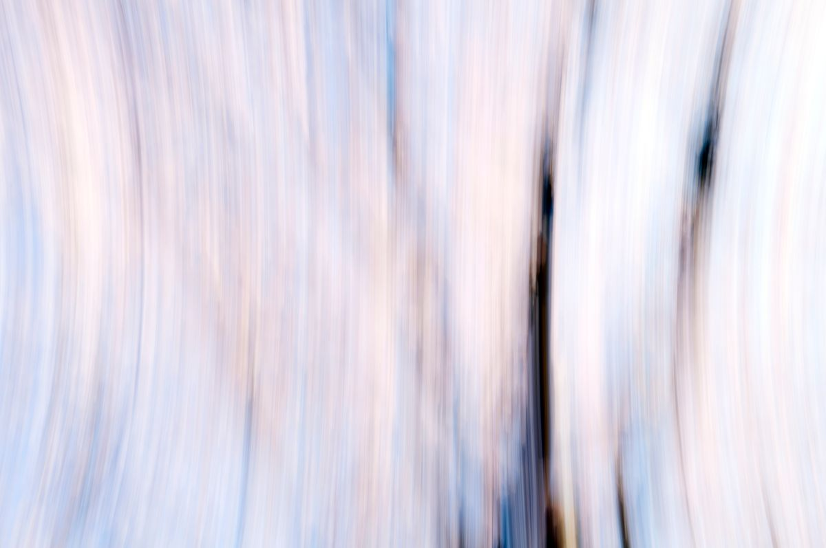 CherryBlossoms.Blur. 135.jpg