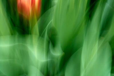 Keukenhof.blur-133.jpg