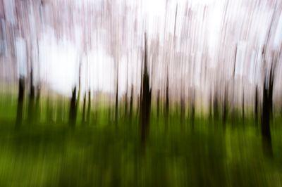 CherryBlossoms.Blur. 58.jpg