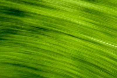 Keukenhof.blur-45.jpg
