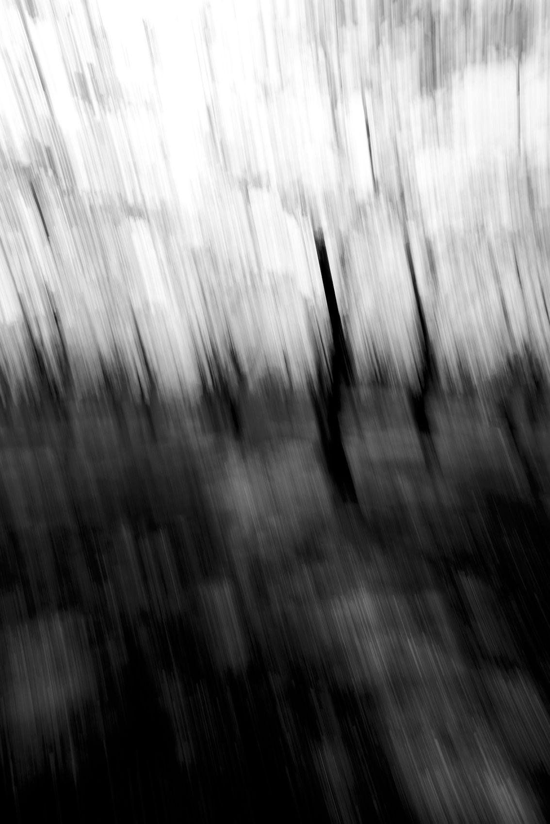 CherryBlossoms.Blur. 67.jpg