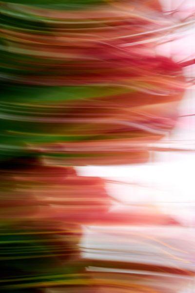 Keukenhof.blur-127vert.jpg